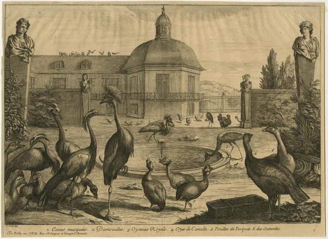 View of a garden with a fountain surrounded by several birds